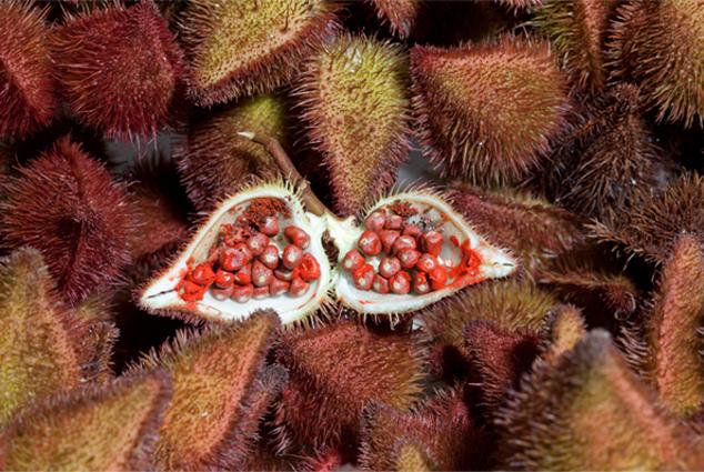 Achiote plody a semena